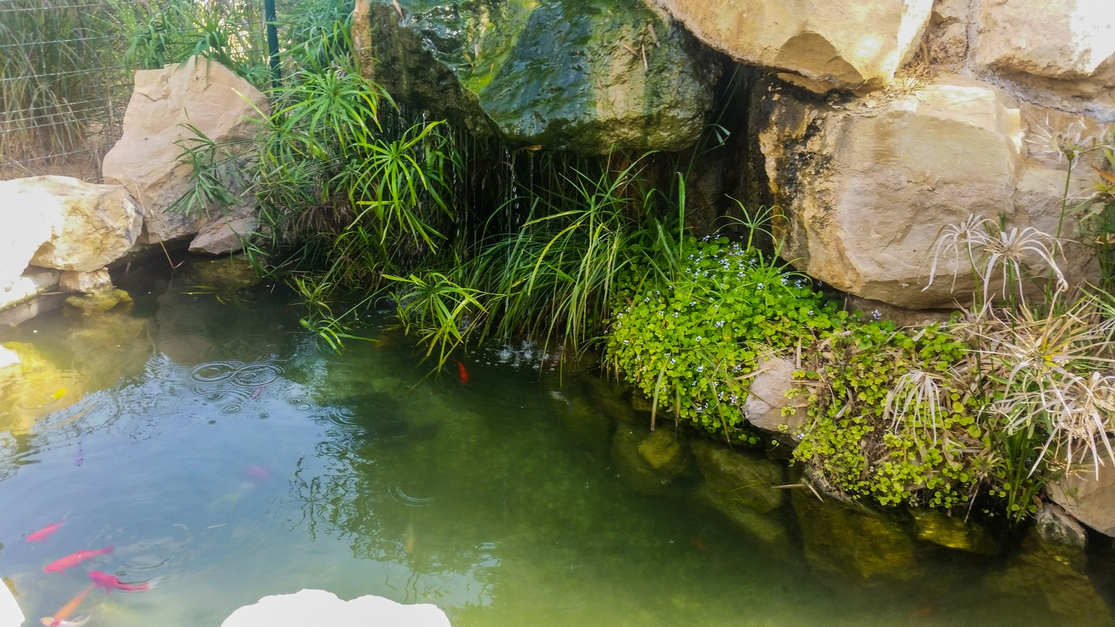 Декоративная горка над мини бассейном с рыбками в центре кибуца Ревивим