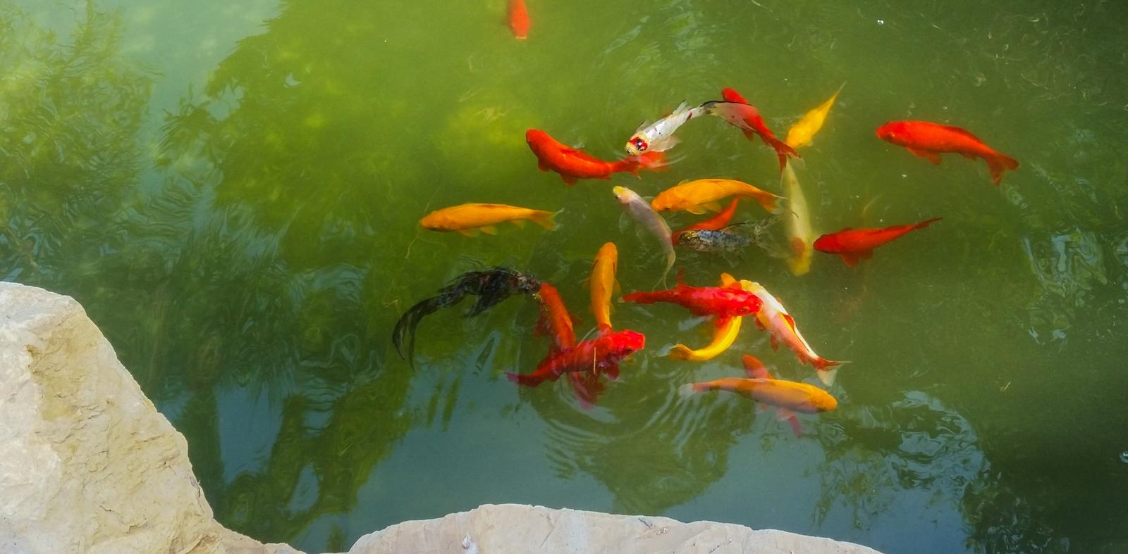 бассейн с рыбками в центре кибуца Ревивим