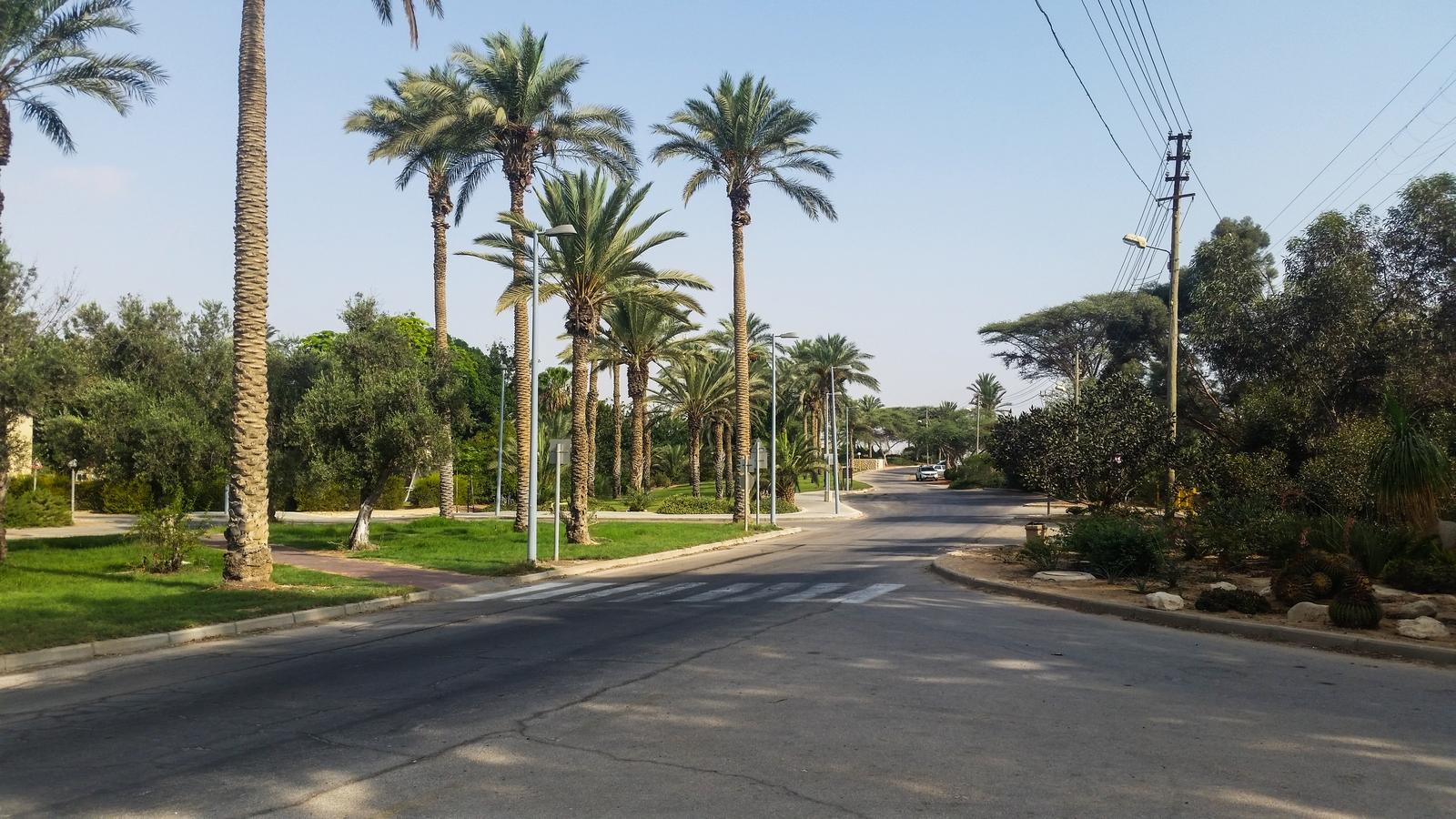 Основная дорога и круг движения в кибуце Ревивим