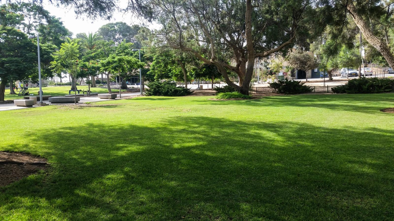 Вечно зеленая травка в центре кибуца Ревивим