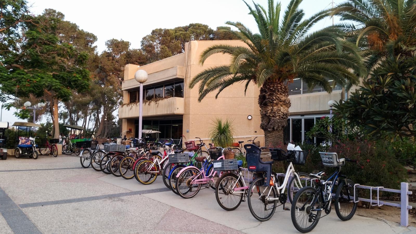 Любимый транспорт в кибуце Ревивим - велосипед