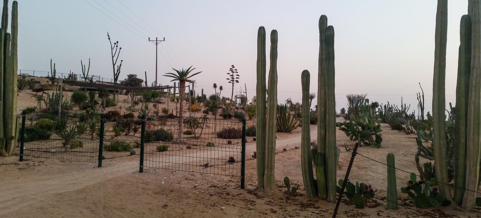 Сад кактусов в кибуце Ревивим