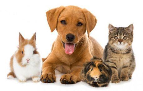 Принимают ли кибуцы репатриантов с домашними животными?