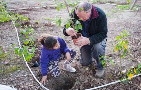 Ту бе-Шват в кибуце Мааган: новые репатрианты сажают свои первые деревья